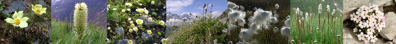 Floral biodiversity in mountains